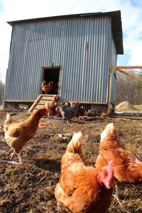 Renovated Chicken Coop