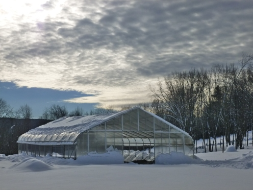 Snow piling up around the greenhouse