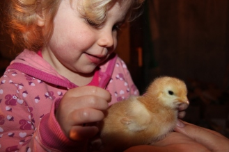 Chick Holding