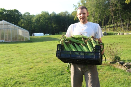 Sweet Corn Harvest