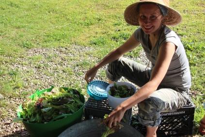 Wrinsing Salad Mix