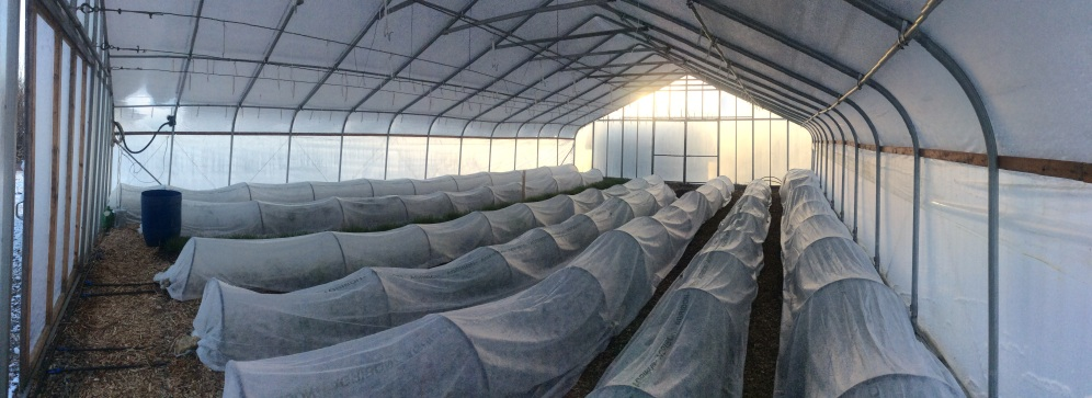Row covers projecting winter greens