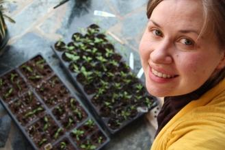 Kaarina Transplanting Tomatoes