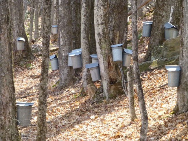 Woods full of Buckets