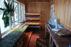 Trays of plants