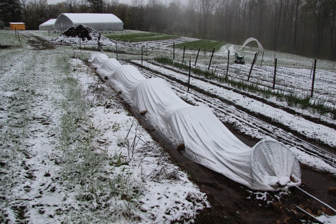 Snow on the Row covers