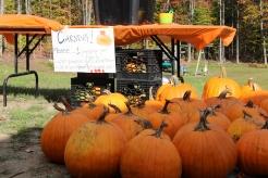 Pumpkins waiting their carving
