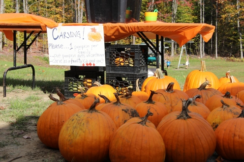 Pumpkins waiting their carving