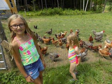 Hello Chickens