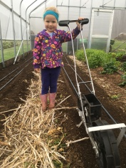 Seeding Lettuce Mix