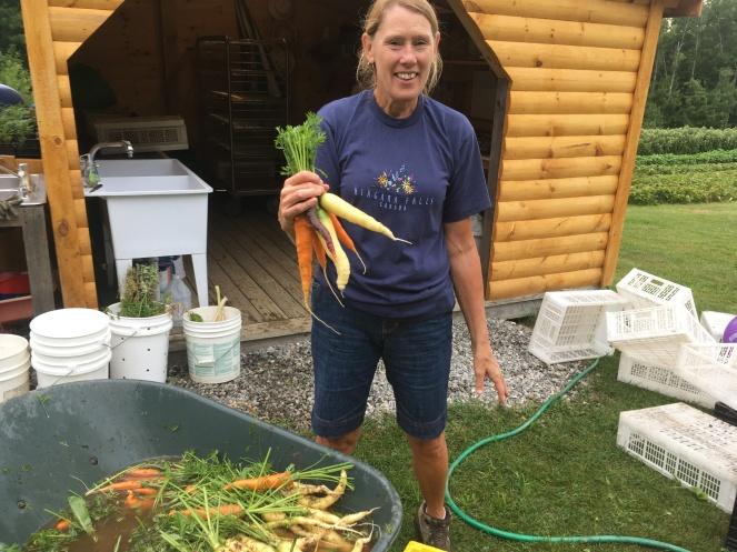 Bunching Carrots